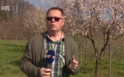 Plodovi zemlje: Kako pravilno rezati voćke